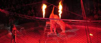 артист цирковой с жильём